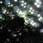 熱帯雨林ルームの天井を眺める