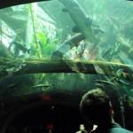 熱帯雨林の池を下から眺める